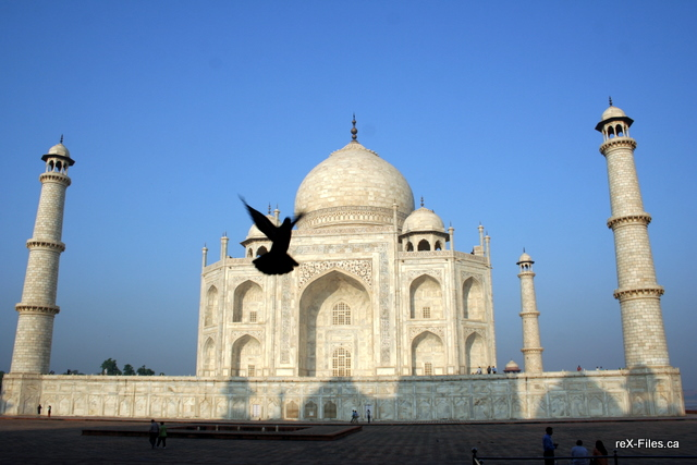 Caught a pigeon in the shot in front of the Taj Mahal.
